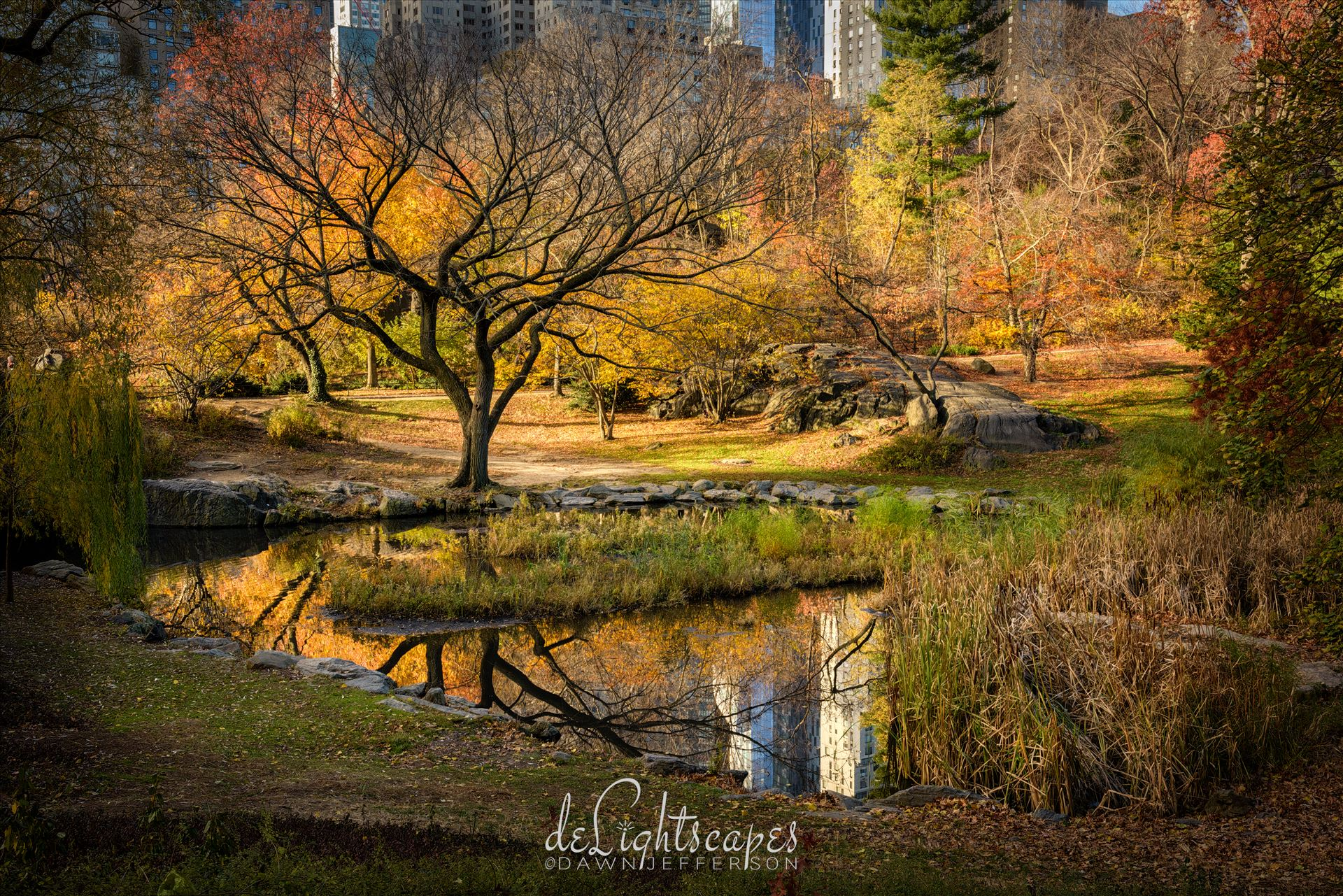 Central Park Autumn Reflections -  by Dawn Jefferson