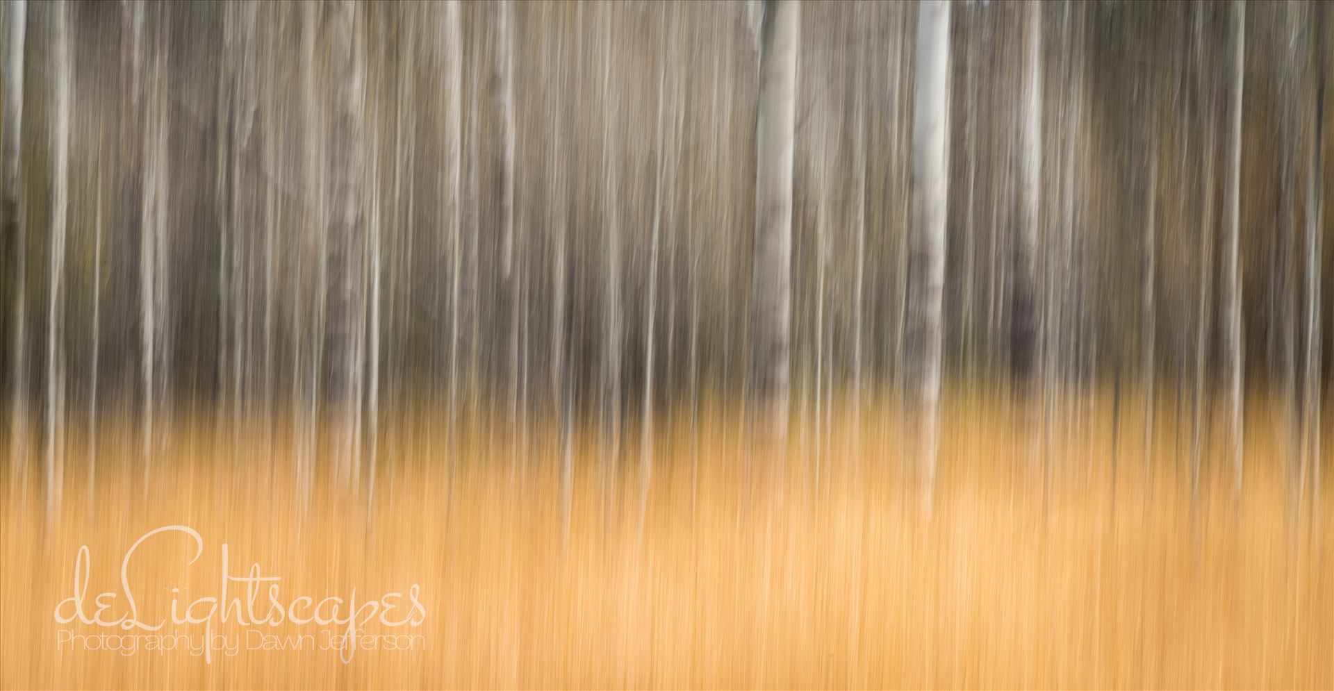 Bare Aspen - Intentional Camera Movement (ICM) - purposeful movement of the camera while the shutter is open causing intentional blurring of your subject. This is one of my favorite techniques for making dreamy abstracts. by Dawn Jefferson