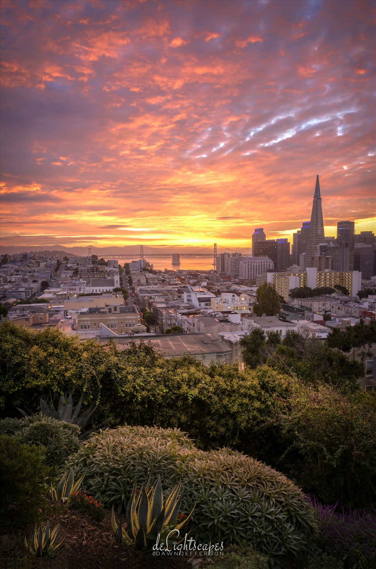 Sunrise at the Park - Beautiful sunrise over looking San Francisco. by Dawn Jefferson