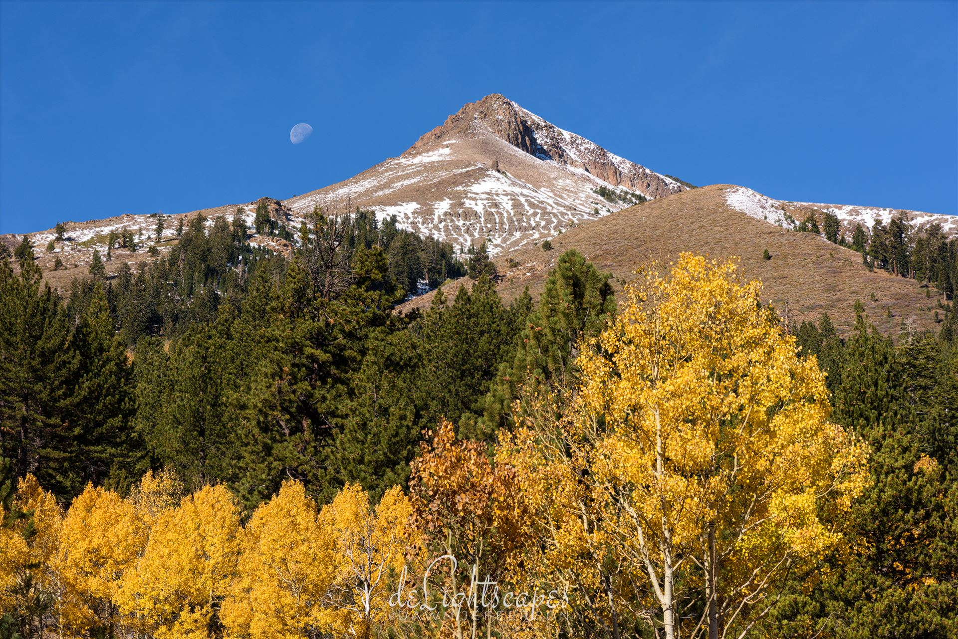 Fall Moon - Eastern Sierra fall foliage and the moon. by Dawn Jefferson