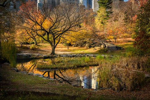 Preview of Central Park Autumn Reflections