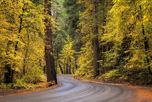 The Fall Road -