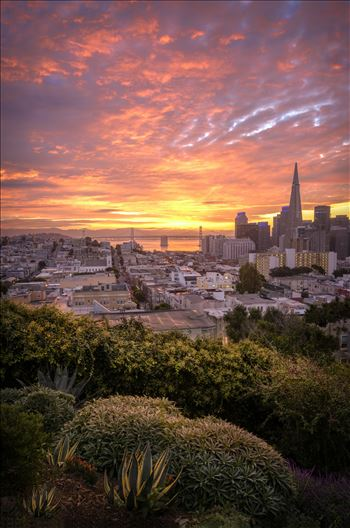 Sunrise at the Park - Beautiful sunrise over looking San Francisco.