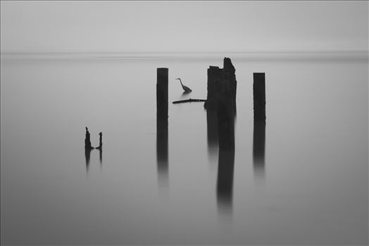 Thirty Seconds of Stillness - This is a thirty second exposure in the which the hunting heron stood completely still focused on his fishing.